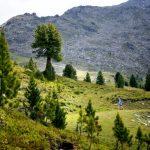 Zirbe - Koningin van de Alpen - ZirbenFamilie